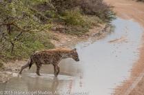 Spotten Hyena. ©2015 Jeane Vogel Studios